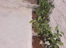 بيت استثماري للبيع في  ابونصير   بالقرب من دوار الروابده   طابقين بسعر مغري