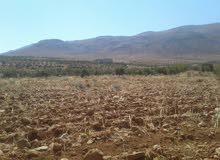 أرض زراعية للجادين في قطنا