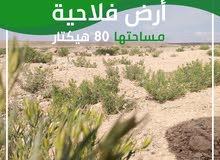 أرض فلاحية مساحتها 80 هكتار