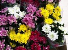 شتلات زهور