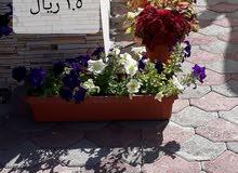 اشجار  وزهور للبيع