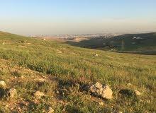 قطعة ارض للبيع في شفا بدران زينات الربوع حوض الشكاره