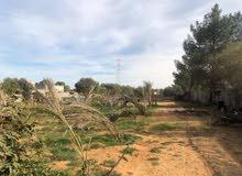 مزرعه في تاجوراء المصانع 7700 متر للبيع
