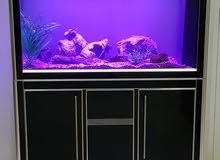 Excellent Condition Large Fish Aquarium !!!