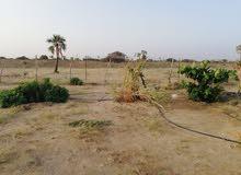 مزرعة واستراحة للإيجار اليومي بالحريضة مساحتها 13 الف متر مربع تبعد عن الحريضة 5كلم طريق محايل
