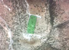 ارض للبيع في بلال(بدر الجديدة) بسعر مناسب