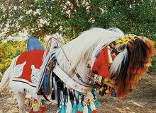 حصان منسب العمر عشره هذي صوره اوضح