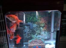 حوض سمك حجم وسط مع 12 سمكه