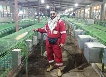 ابحث على ممول اماراتي لانشاء مزرعه ارنب مشروع مربح جدا