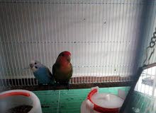 birds with cage and accessories