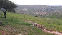 أرض مزرعه في المفرق دحل الأردن على أعلى قمه تناطح السحاب