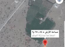 ارض قريبة من المسجد والشارع القار بركاء / العقدة 4كونر