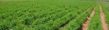 14قيراط زراعة للبيع في قرية شنره البحرية مركز السنطه ناحية محيبس الارض صالحة لزراعة كافة المحاصيل