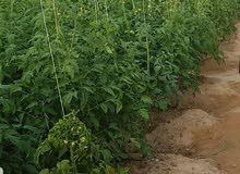 للبيع مزرعة جاهزه من جميع الخدمات