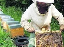 عسل حر الزكوم