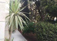 شقه ارضية مع حديقة للبيع في عرجان مطبخ راكب 3 نوم