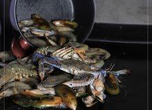 السطل البحري بمختلف المأكولات البحرية
