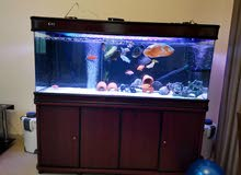 150 cms brand new camry aquarium for sale with external and internal filter