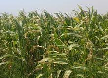 ارض زراعيه 01033639236