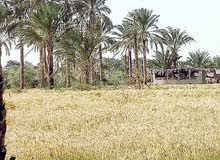 ارض زراعيه بالفيوم للبيع