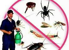 اباده  حشرات