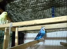 I want sell my 7 bird with home