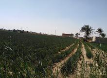 فرصه ارض زراعيه 25 فدان بطريق الفيوم