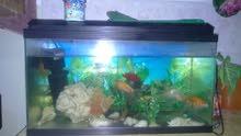 حوض سمك مع سمك