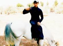 حصان للبيع بسعر مغري لقطه