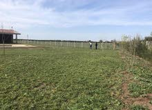 مزرعة الاحلام