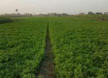 ارض زراعيه مميزه مساحتها 7.5 فدان بالمالحه مركز المنصوره