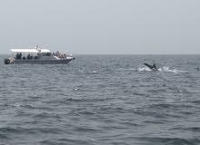 رحلات مشاهدة الدلافين +Dolphin watching and Snorkeling
