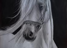 رسم لوحات فنية جميلة