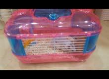 هامستر للبيع hamster for sale