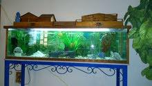 أحواض أسماك الزينة