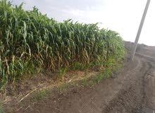 ارض زراعية بالخوجلاب