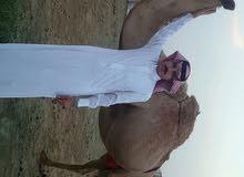 موقعها شرق الرياض 30 كم
