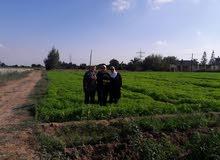 مزرعة للبيع الوسطاء يمتنعون