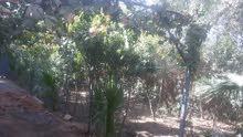 بيع أو مراوس بستان  طابو بستنه  575  متر مع دار سكن