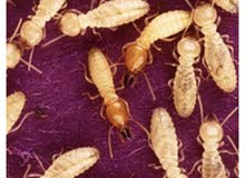 شركة مكافحة الحشرات وحقنها وتنظيف المباني