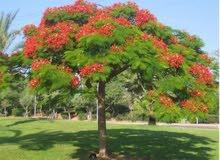 توريد جميع انواع النباتات والاشجار والنخيل