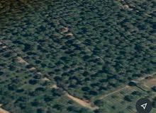 اراضي زراعيه طابو زراعي