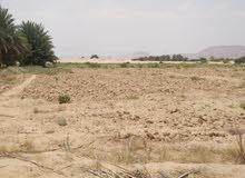 مزرعه في قهوة بن عيفان