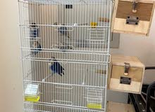 طيور الفيشر