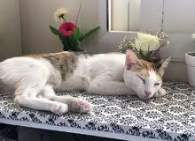 قطة للتبني بدون رسوم