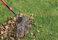 تنظيف حدائق