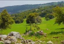 فرصة تملك ارض زراعية في قلب الطبيعه (عجلون ) بنظام الدفعه و القسط