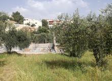 قطعه ارض في منطقه ظهر السرو مقابل مدرسه ظهر السرو للبنين 250متر تصلح للبناء منطقه سكنيه جديده