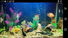 حوض سمك اجنبي لون أبيض فلتر خارجي مع سمك مفترس