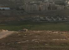 قطعة ارض للبيع شفا بدران زينات الربوع حوض المكمان
